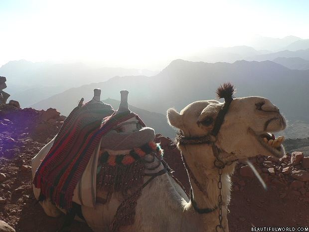 Mount Sinai Facts & Information - Beautiful World Travel Guide