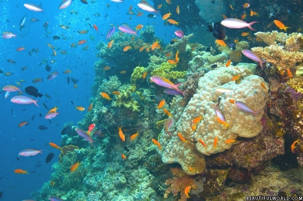 colorful-coral-great-barrier-reef