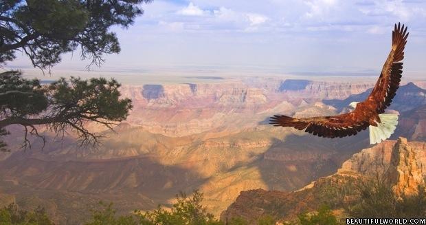 eagle-grand-canyon