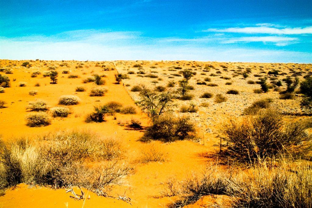 kalahari-desert-3