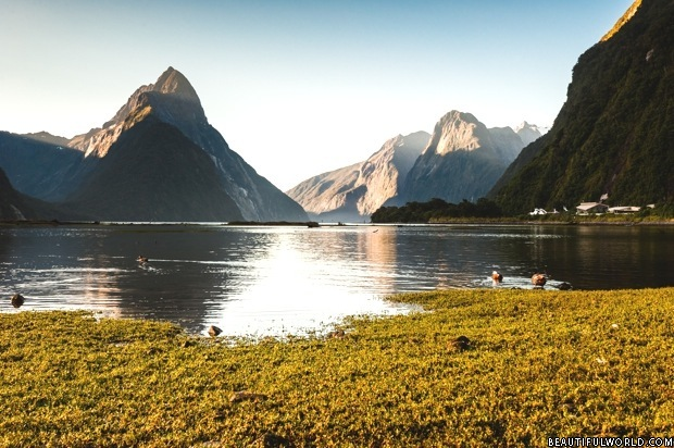 milford-sound-fiordland-national-park