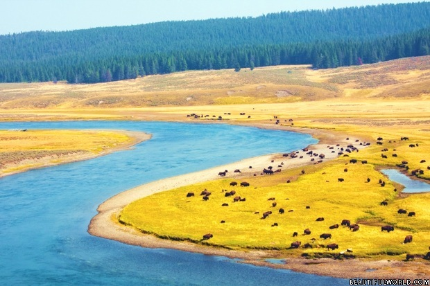 river-yellowstone-national-park
