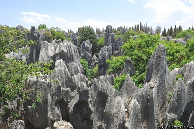 stone-forest-national-park