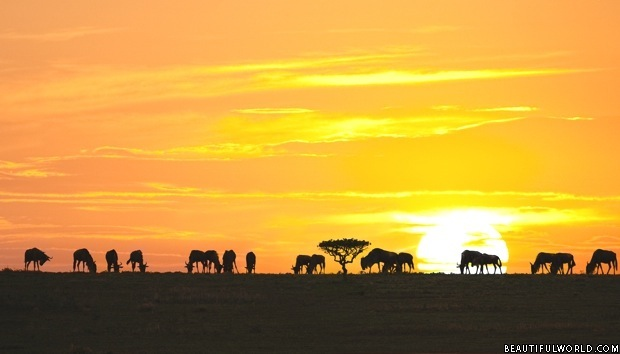 sunrise-serengeti-national-park