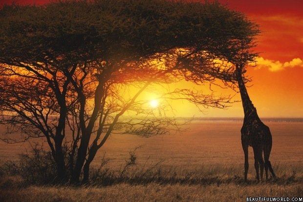 sunset-serengeti-national-park