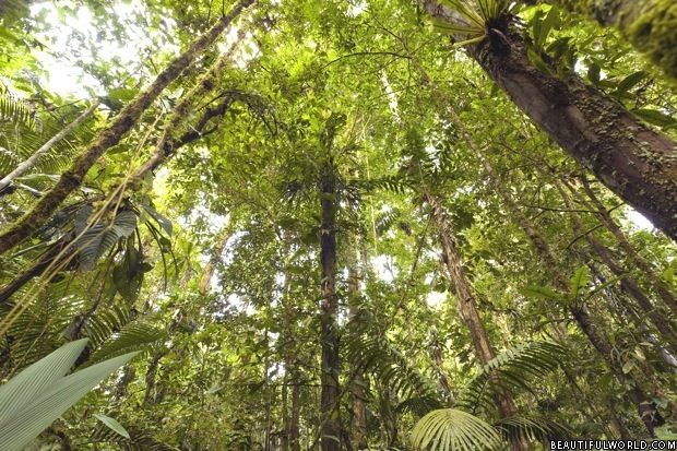 tropical-rainforest-ecuadorial-amazon