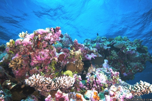 underwater-landscape-great-barrier-reef