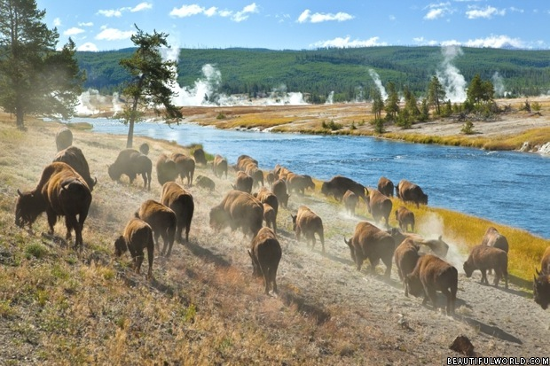 yellowstone-national-park