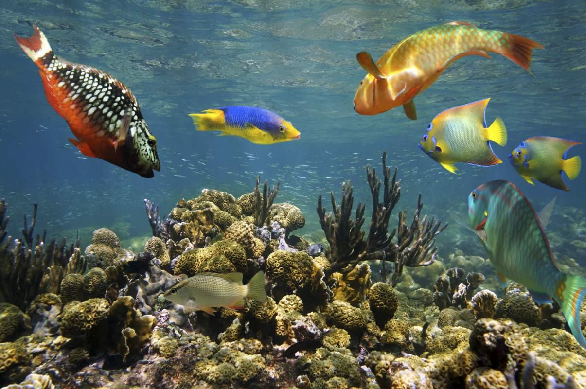 Coral Reef at Tayrona