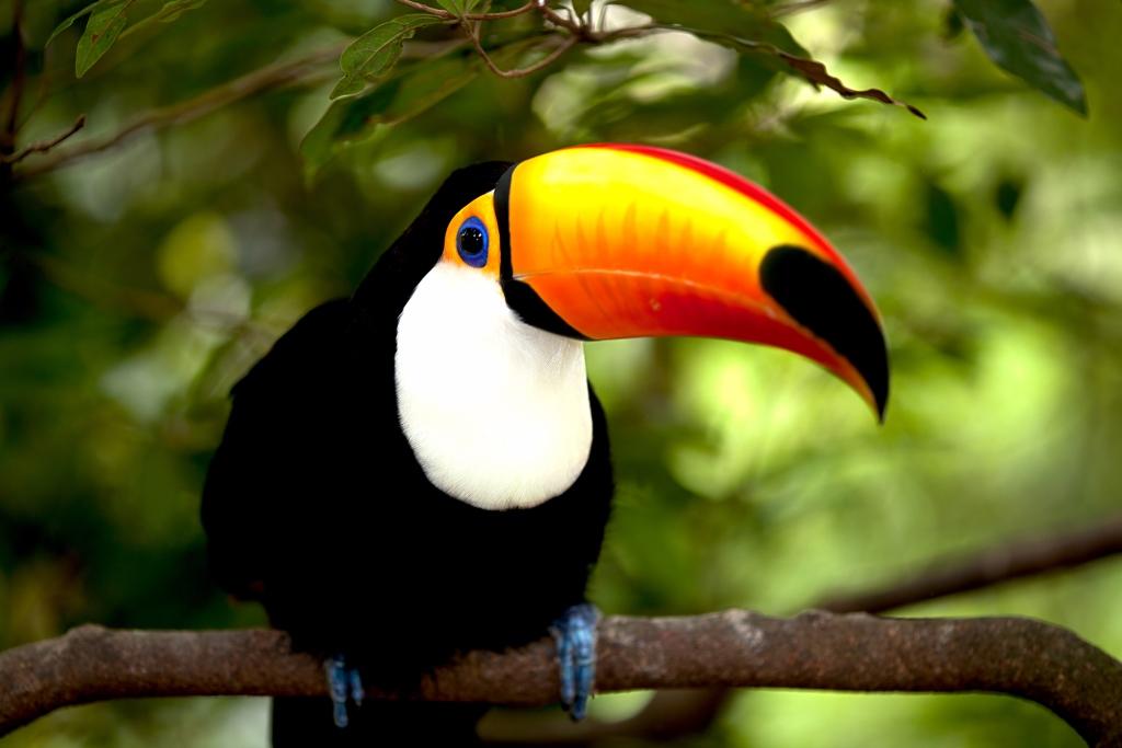 Tayrona Natural Park birds