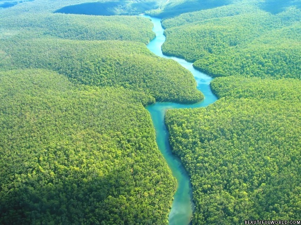 Image result for Beautiful forests of Amazonia