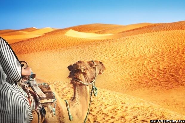 camel-sahara-desert