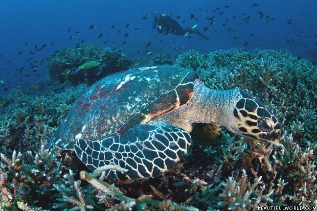 coral-reef-komodo-national-park