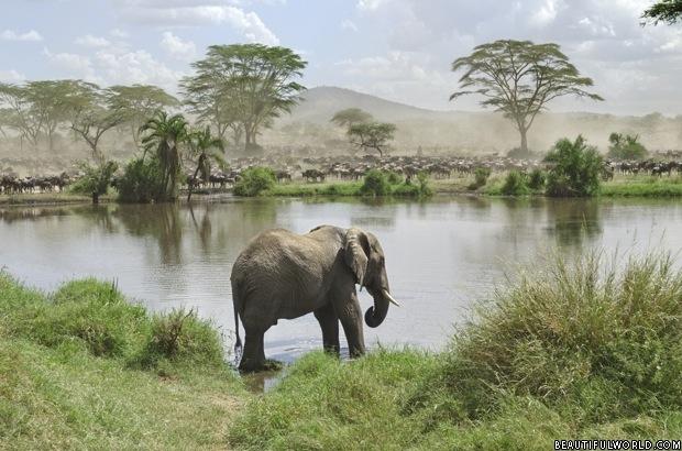 elephant-serengeti-national-park