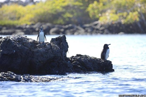 galapagos-national-park