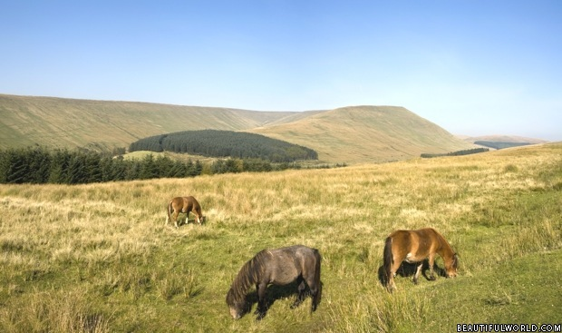 horses-grazing-pen-y-fan