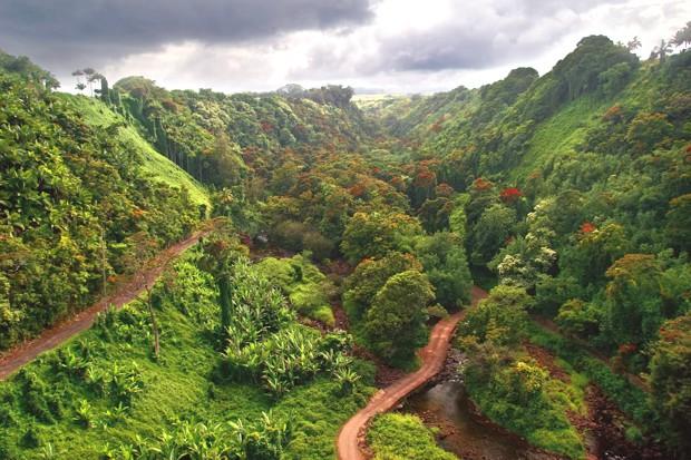 jungle-big-island-hawaii