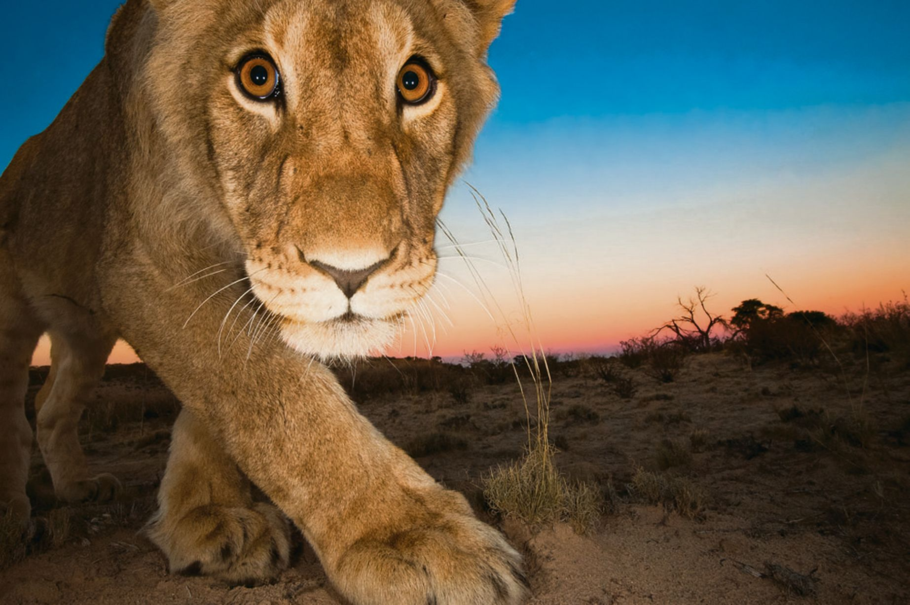 Kalahari Desert Facts Information Beautiful World Travel Guide