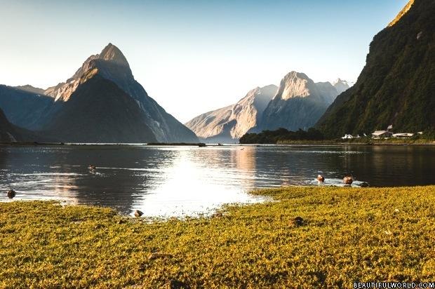 milford-sound-fiordland-national-park