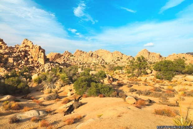 Mojave Desert facts