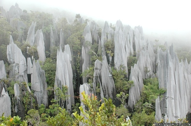 pinnacles-stone-forest-national-park