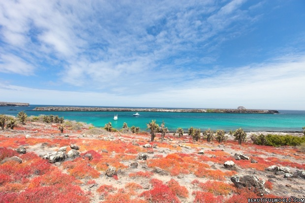 south-plaza-island-galapagos