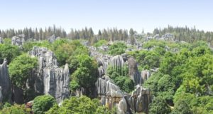 Stone Forest National Park