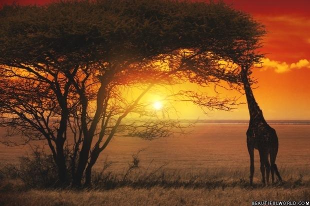 sunset-serengeti-national-park