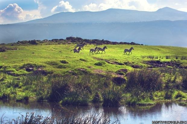 zebras-ngorongoro-crater