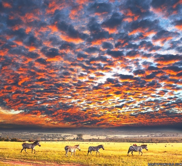 zebras-sunset-serengeti-national-park