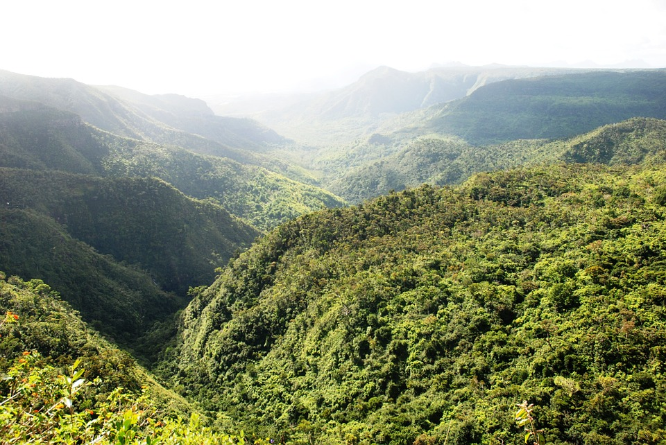 Mauritius' forest