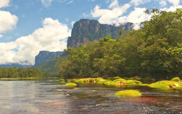 Wet Forests in Canaima Park