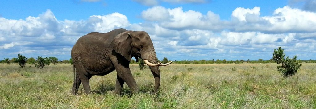 Krugers Grassland