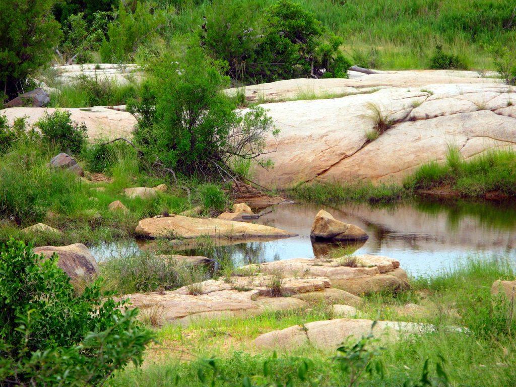Sub Tropical Kruger